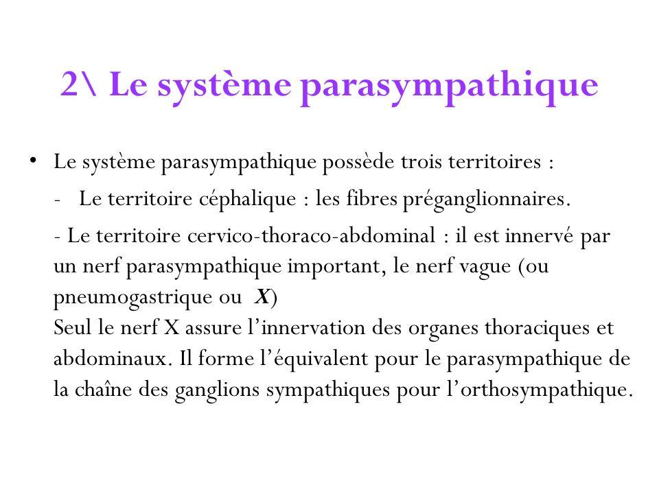 2\ Le système parasympathique
