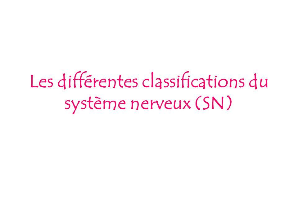 Les différentes classifications du système nerveux (SN)