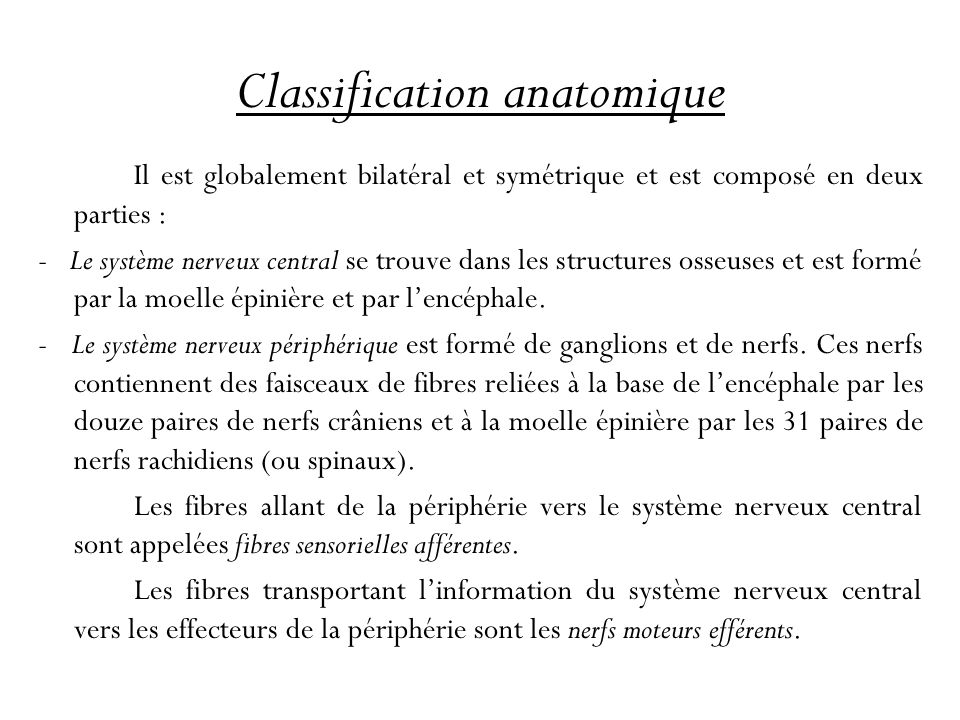 Classification anatomique