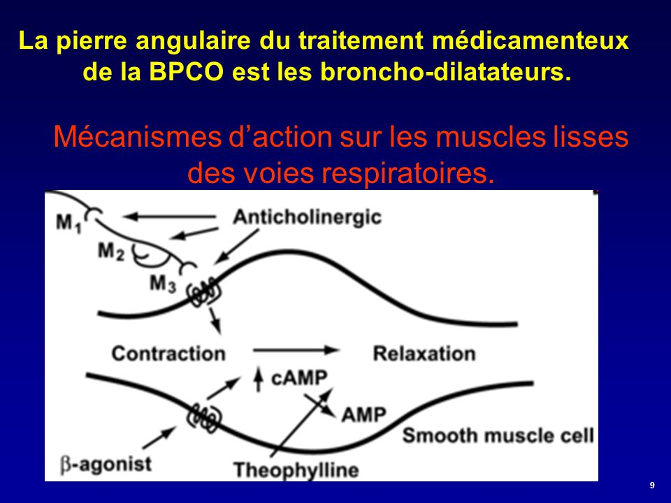Mécanismes d'action sur les muscles lisses des voies respiratoires.