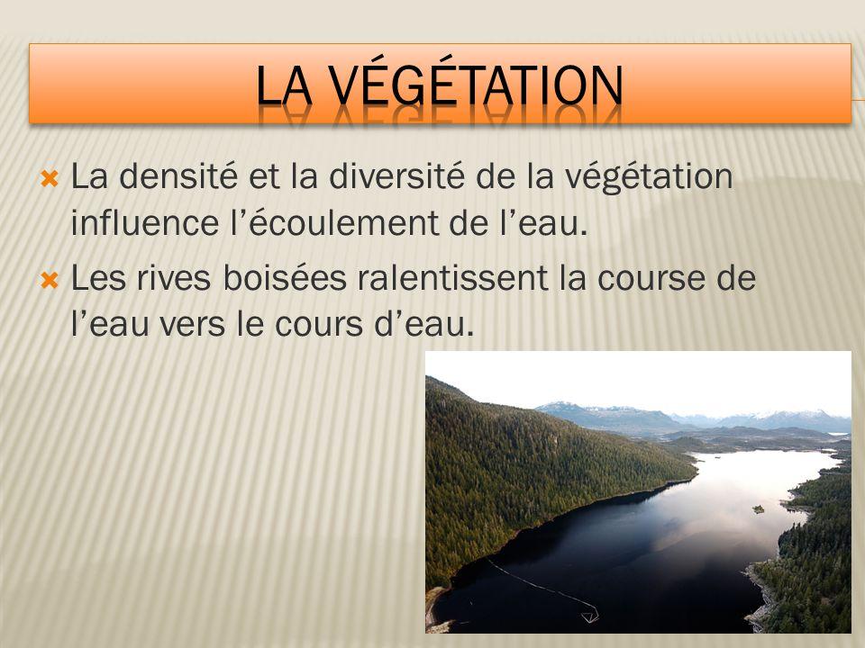 La végétation La densité et la diversité de la végétation influence l'écoulement de l'eau.