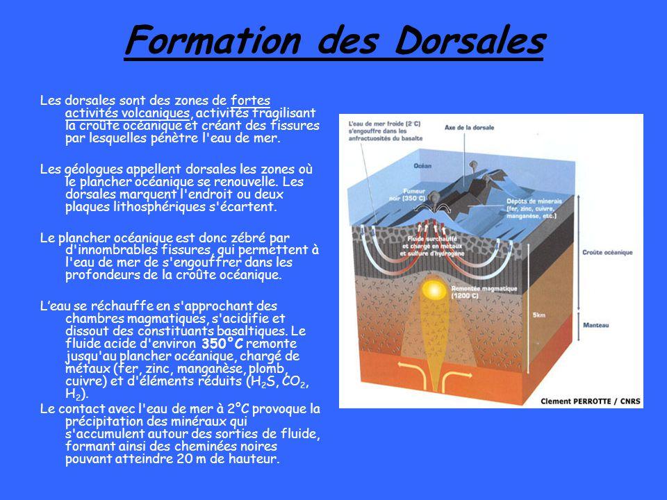 Formation des Dorsales