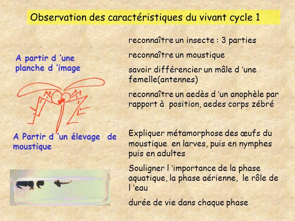 Observation des caractéristiques du vivant cycle 1