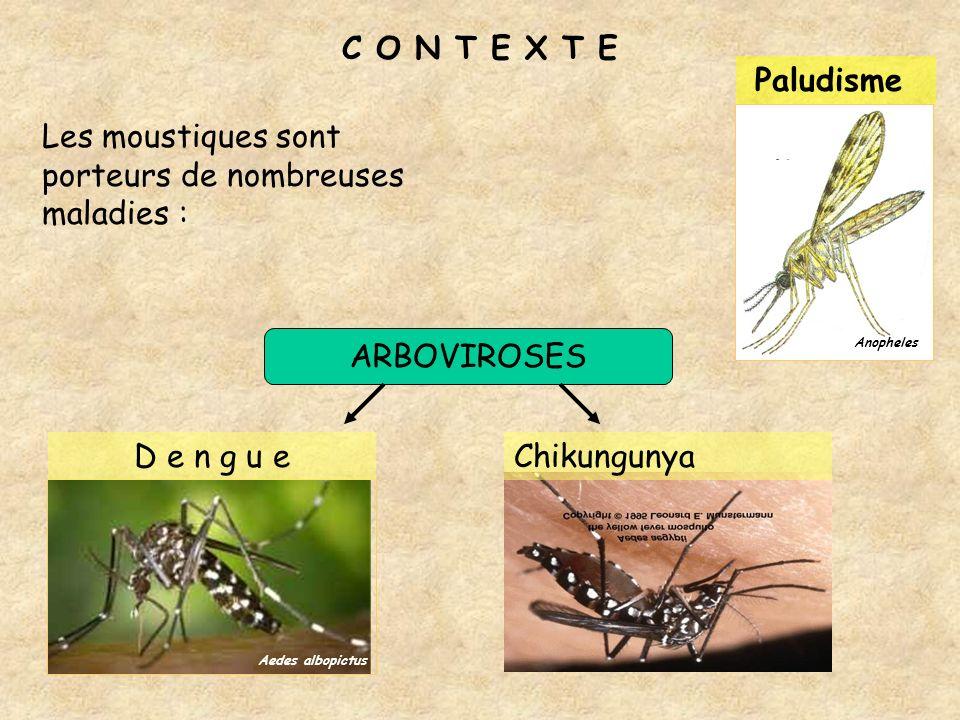 Les moustiques sont porteurs de nombreuses maladies :