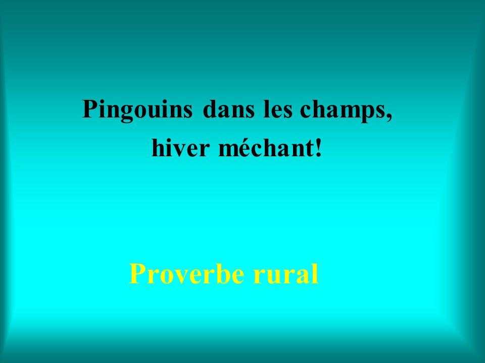 Pingouins dans les champs, hiver méchant!