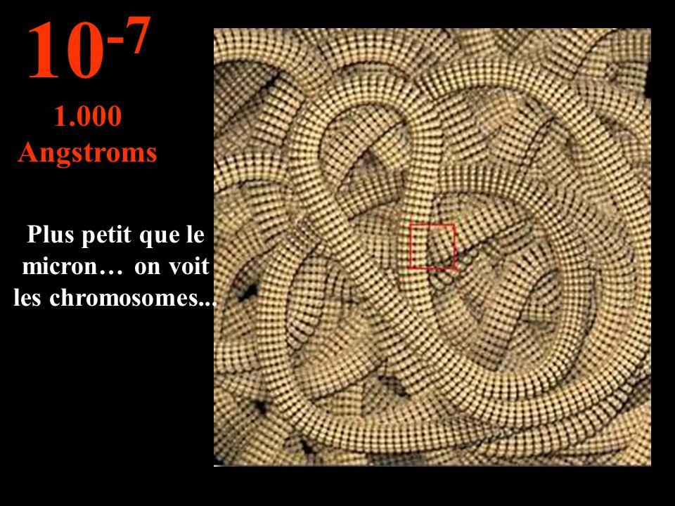 Plus petit que le micron… on voit les chromosomes...
