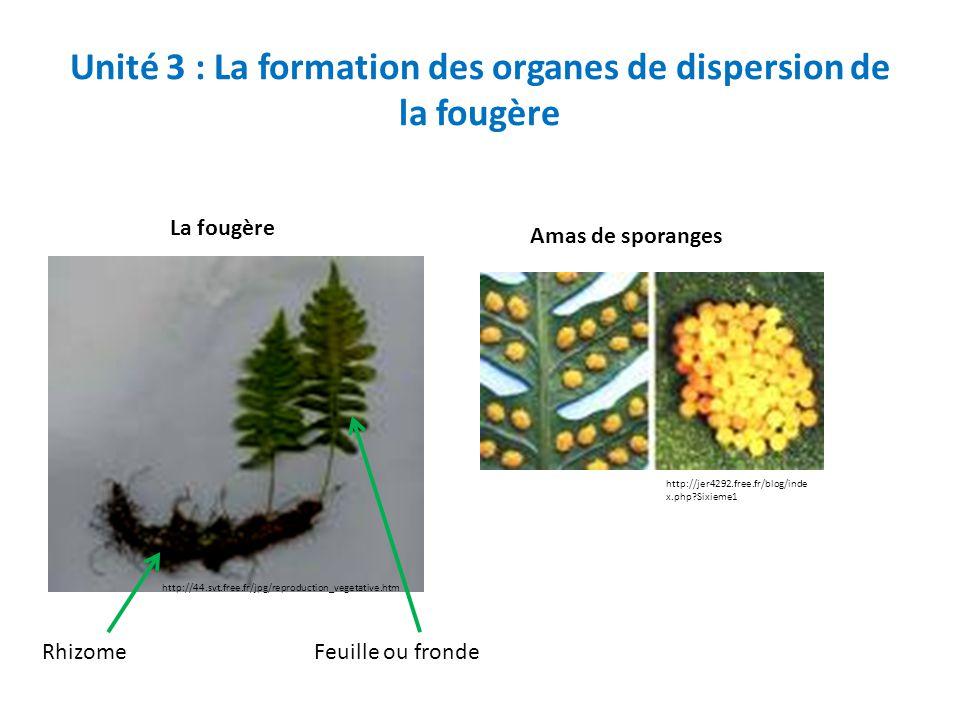 Unité 3 : La formation des organes de dispersion de la fougère