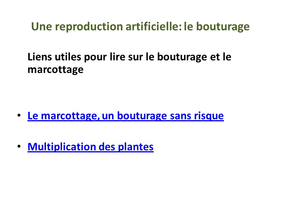 Une reproduction artificielle: le bouturage