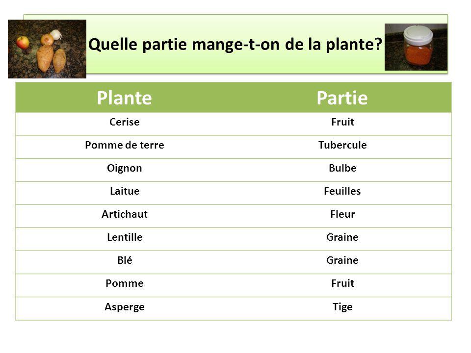 Quelle partie mange-t-on de la plante