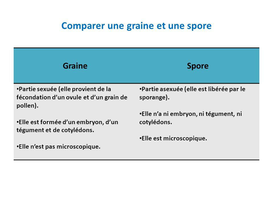 Comparer une graine et une spore