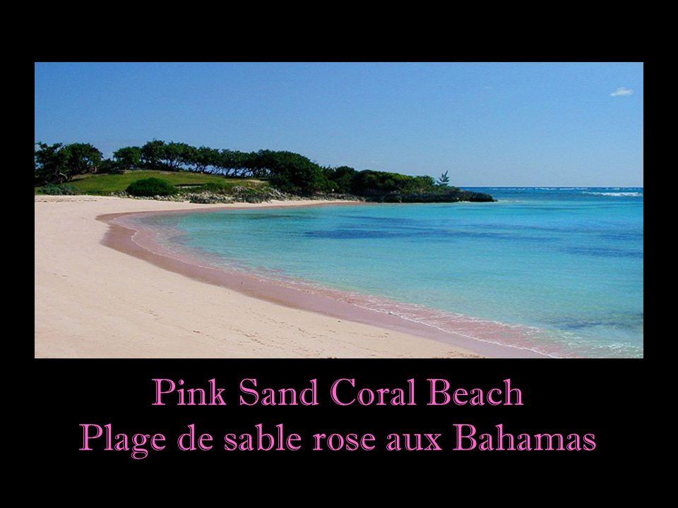 Plage de sable rose aux Bahamas