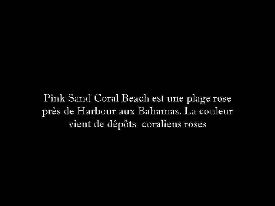 Pink Sand Coral Beach est une plage rose près de Harbour aux Bahamas