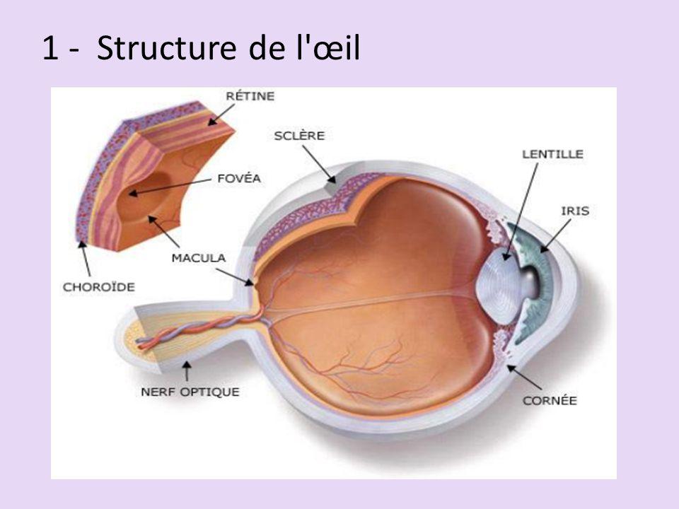 1 - Structure de l œil