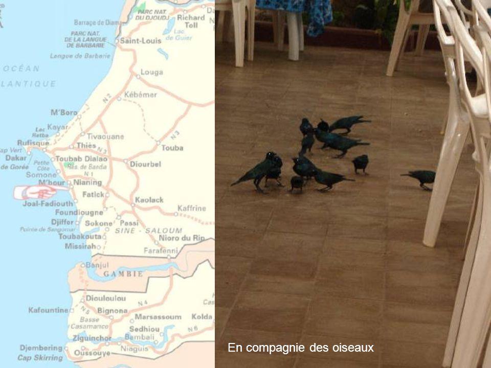 En compagnie des oiseaux