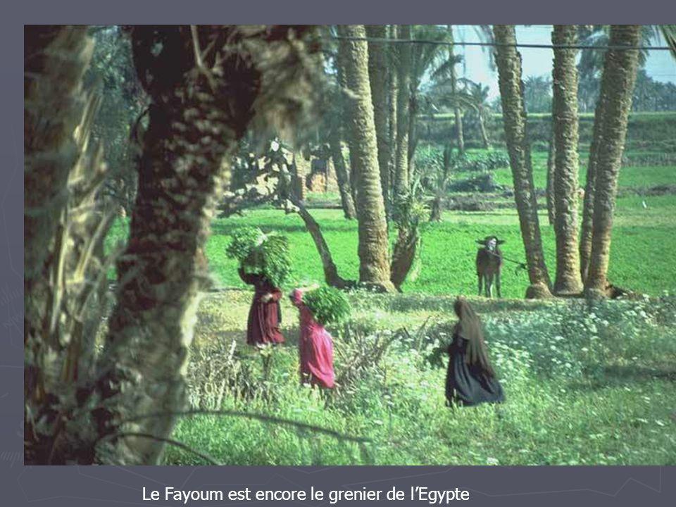 Le Fayoum est encore le grenier de l'Egypte