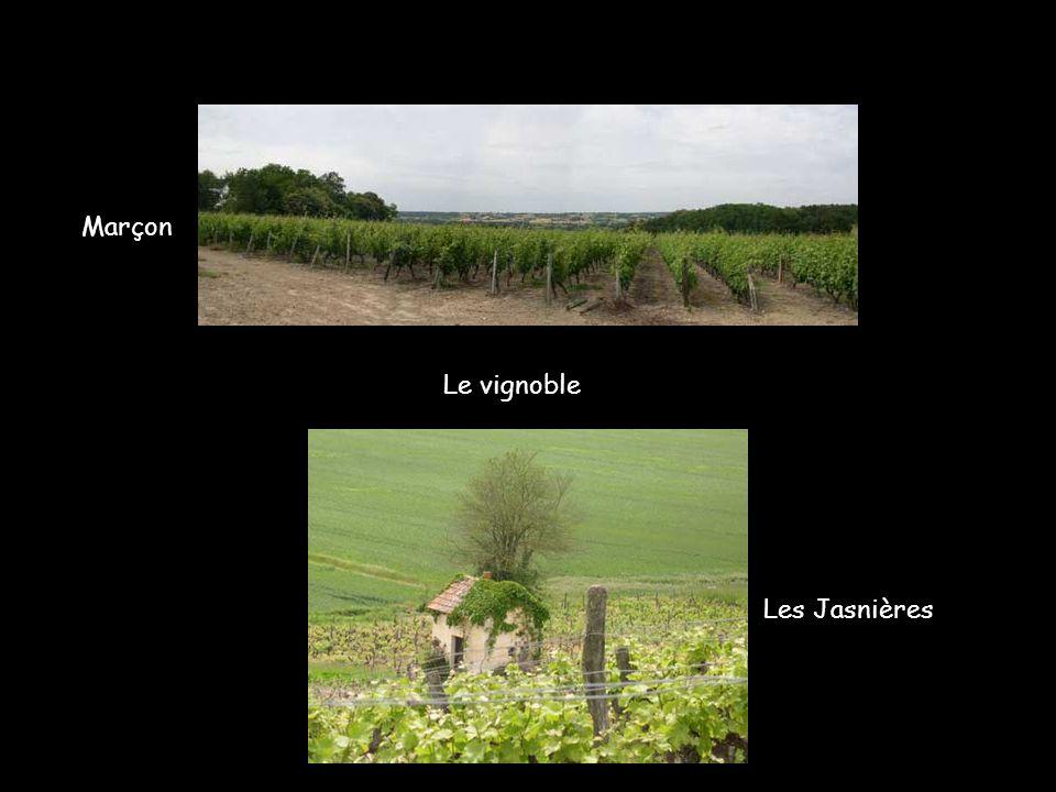 Marçon Le vignoble Les Jasnières