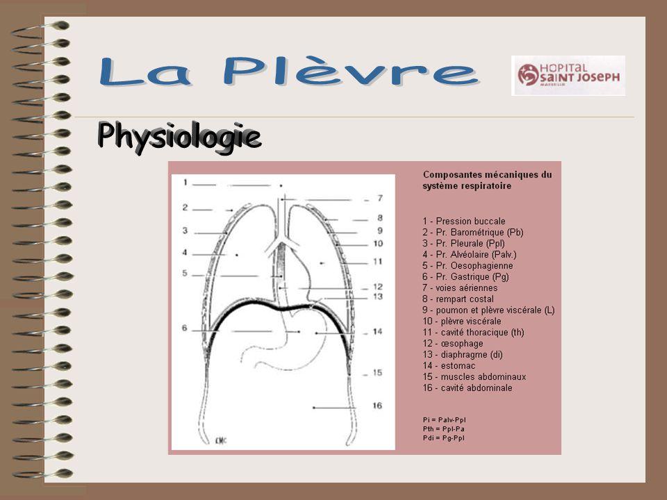 La Plèvre Physiologie
