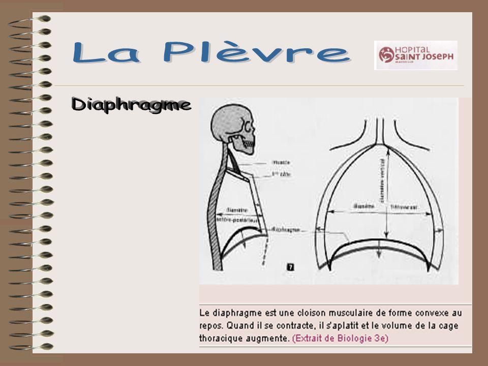 La Plèvre Diaphragme