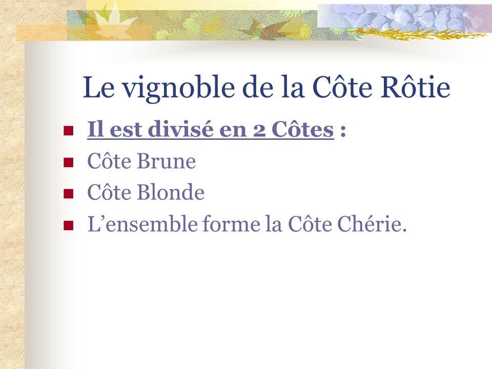 Le vignoble de la Côte Rôtie