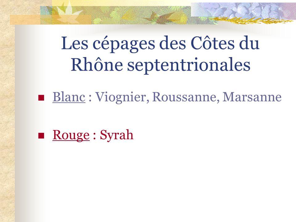 Les cépages des Côtes du Rhône septentrionales