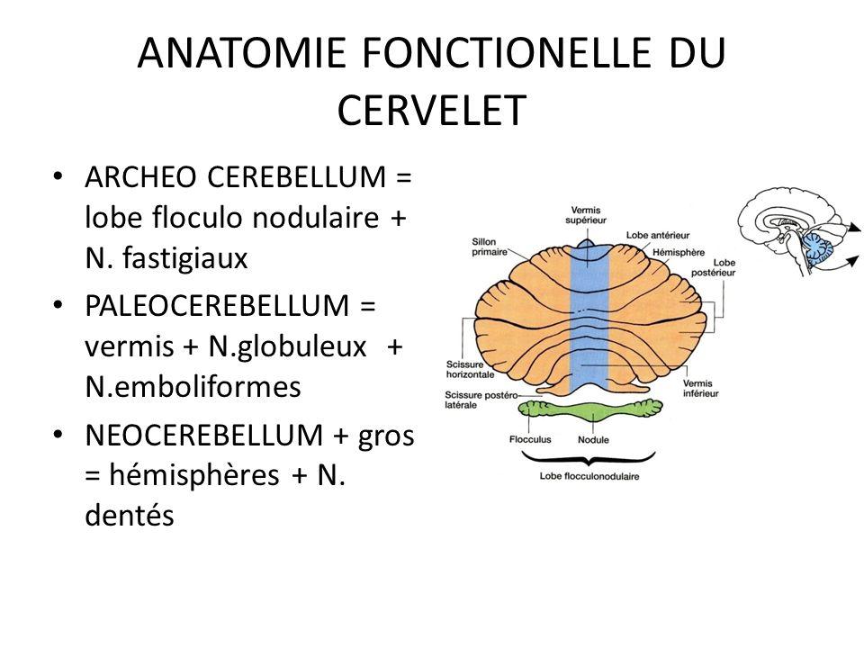 ANATOMIE FONCTIONELLE DU CERVELET