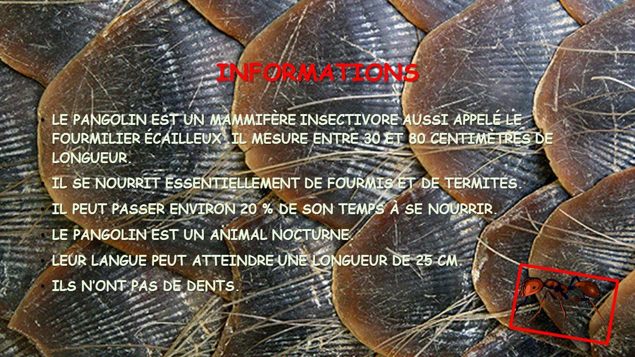 Informations Le pangolin est un mammifère insectivore aussi appelé le fourmilier écailleux .Il mesure entre 30 et 80 centimètres de longueur.