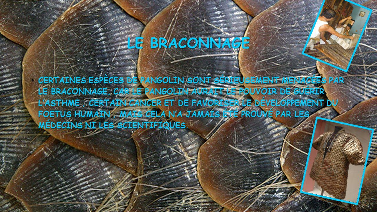 Le braconnage