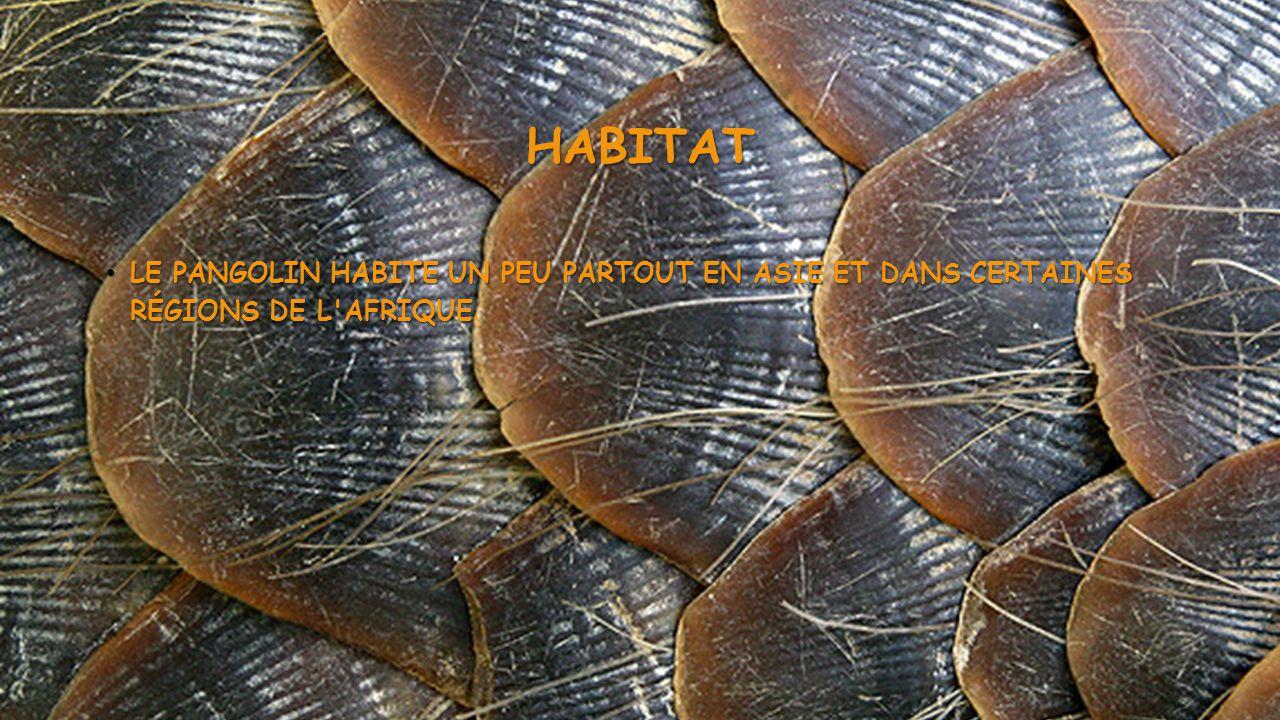 Habitat Le pangolin habite Un peu partout en Asie et dans certaines régions de l Afrique.