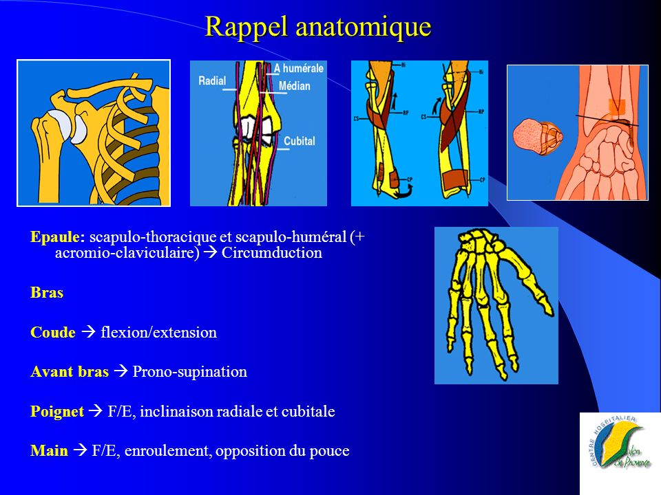Rappel anatomique Epaule: scapulo-thoracique et scapulo-huméral (+ acromio-claviculaire)  Circumduction.