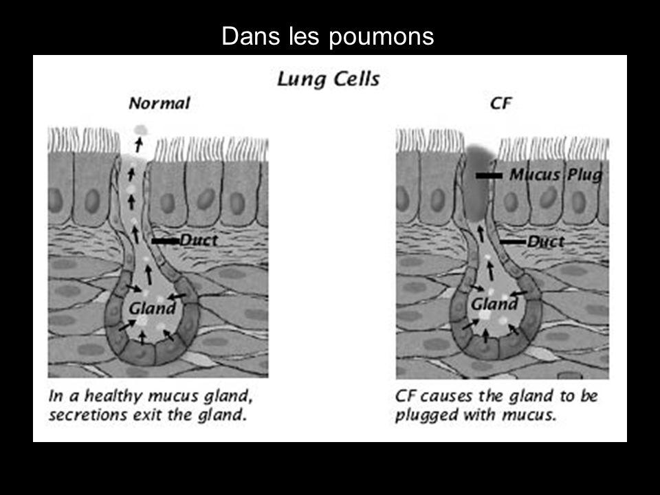 Dans les poumons