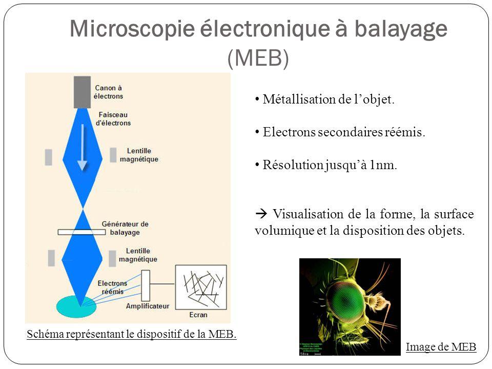 Microscopie électronique à balayage (MEB)