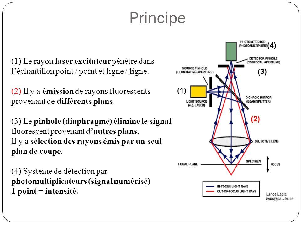 Principe (4) (1) Le rayon laser excitateur pénètre dans l'échantillon point / point et ligne / ligne.