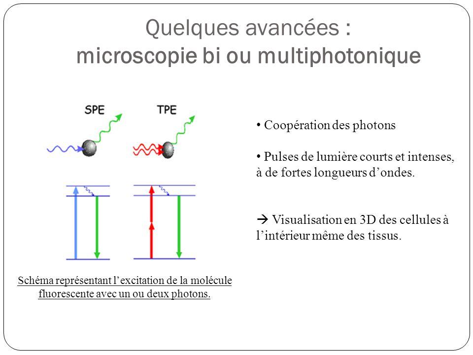 Quelques avancées : microscopie bi ou multiphotonique