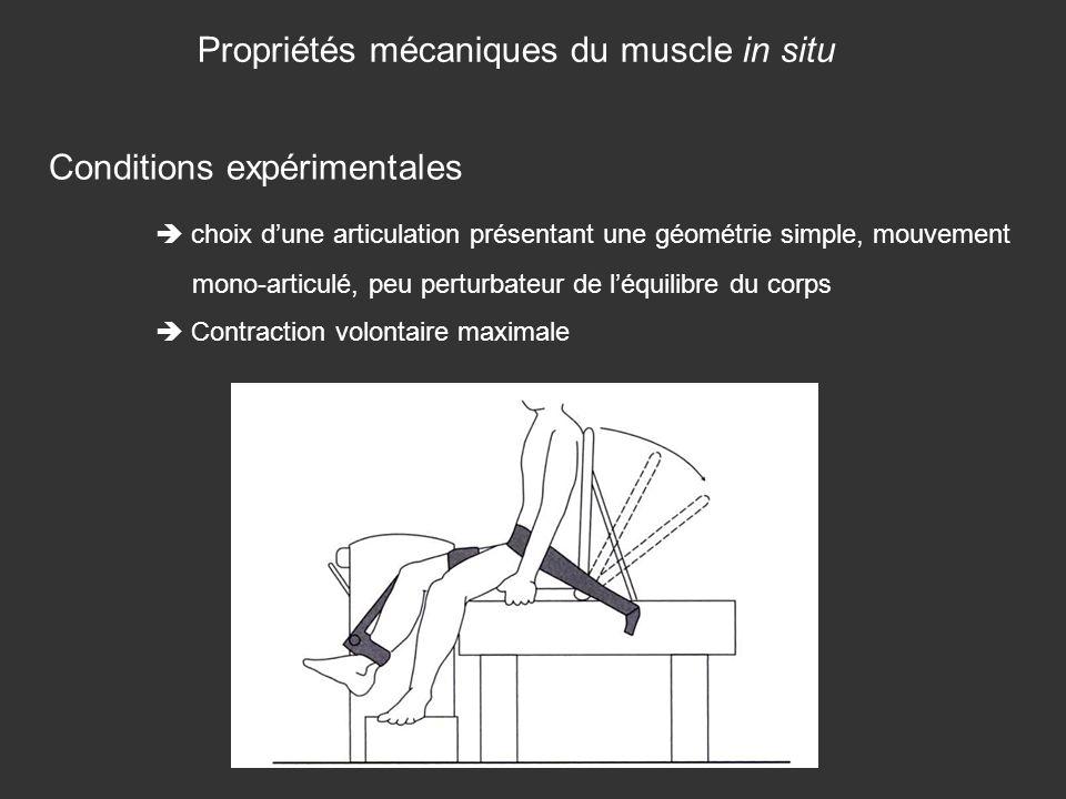 Propriétés mécaniques du muscle in situ