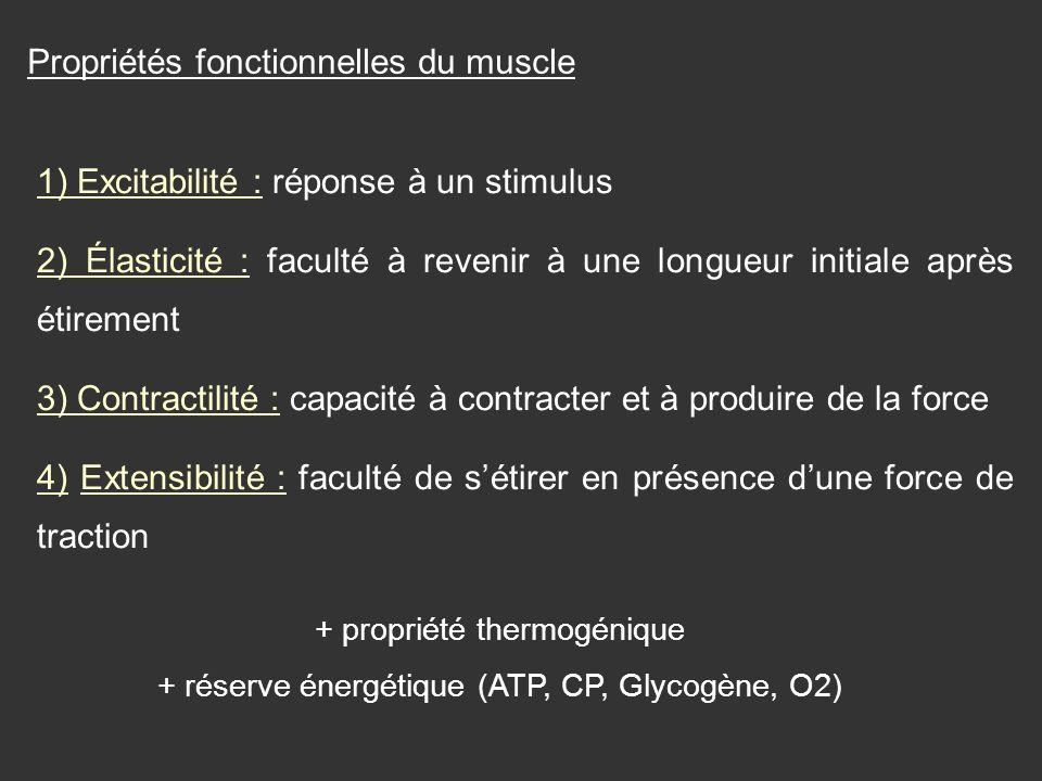 Propriétés fonctionnelles du muscle