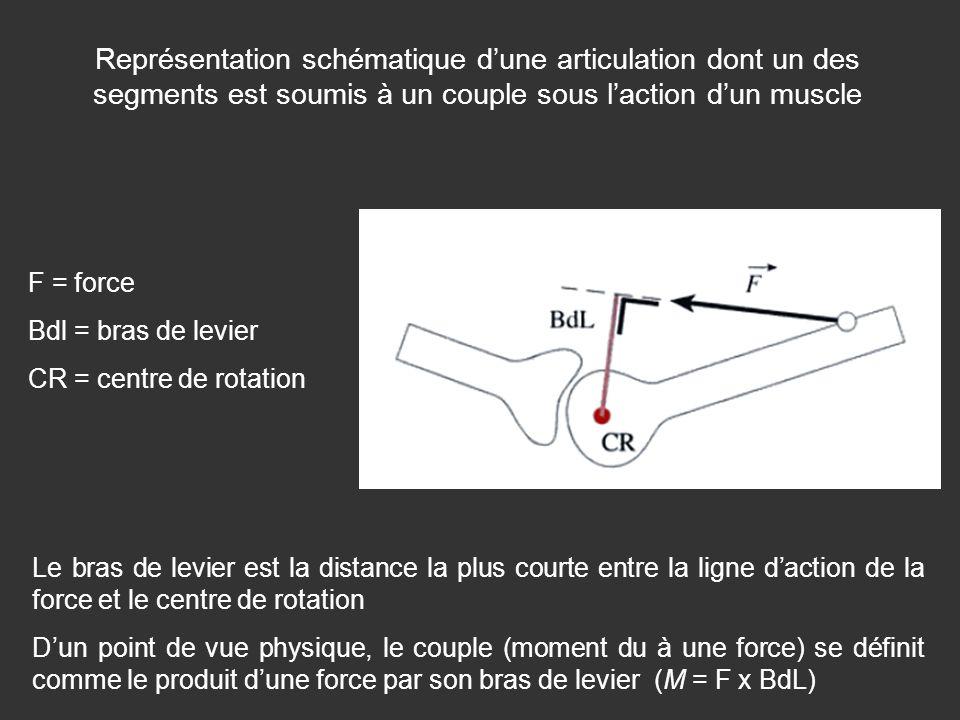 Représentation schématique d'une articulation dont un des segments est soumis à un couple sous l'action d'un muscle