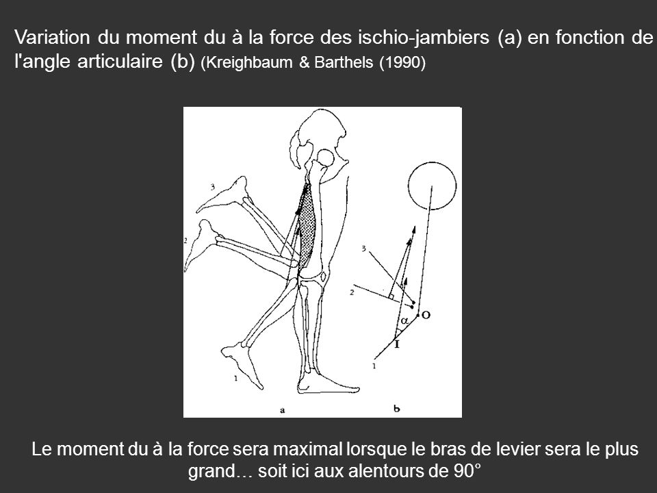Variation du moment du à la force des ischio-jambiers (a) en fonction de l angle articulaire (b) (Kreighbaum & Barthels (1990)