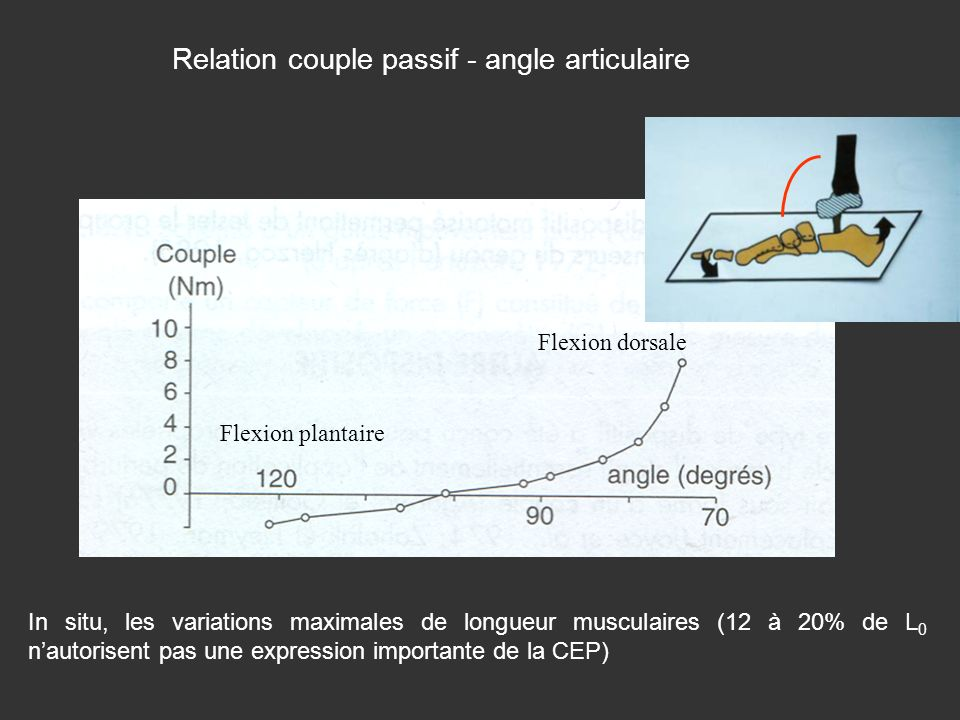 Relation couple passif - angle articulaire