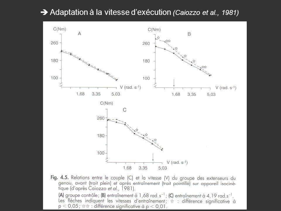  Adaptation à la vitesse d'exécution (Caiozzo et al., 1981)