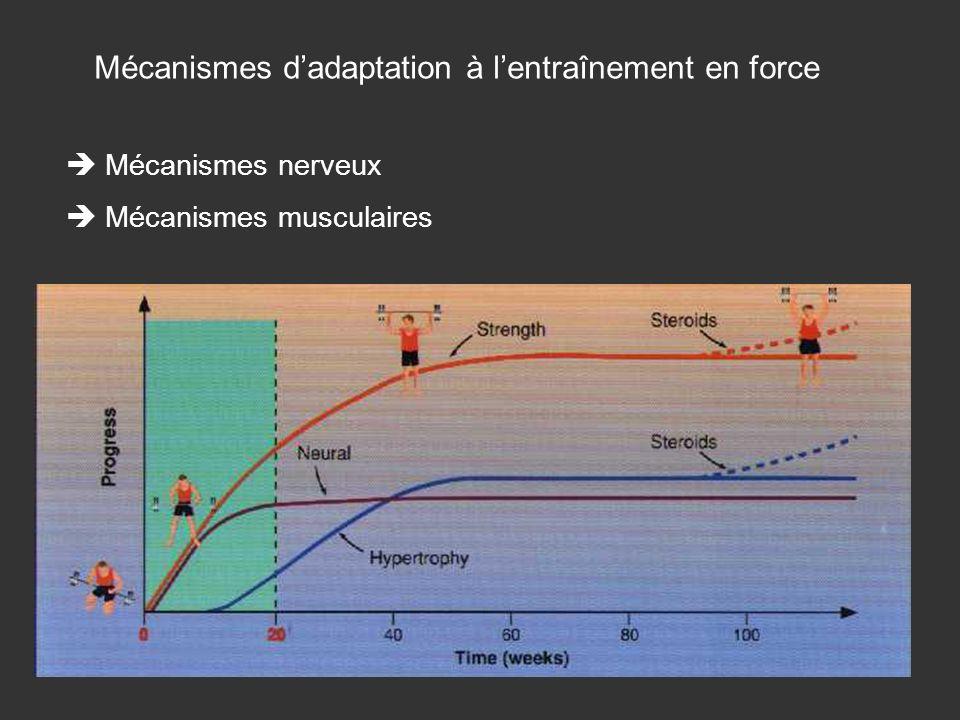 Mécanismes d'adaptation à l'entraînement en force