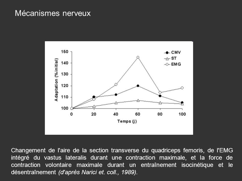 Mécanismes nerveux