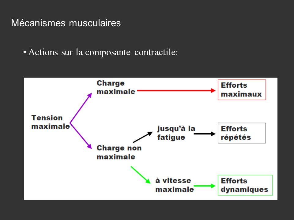 Actions sur la composante contractile: