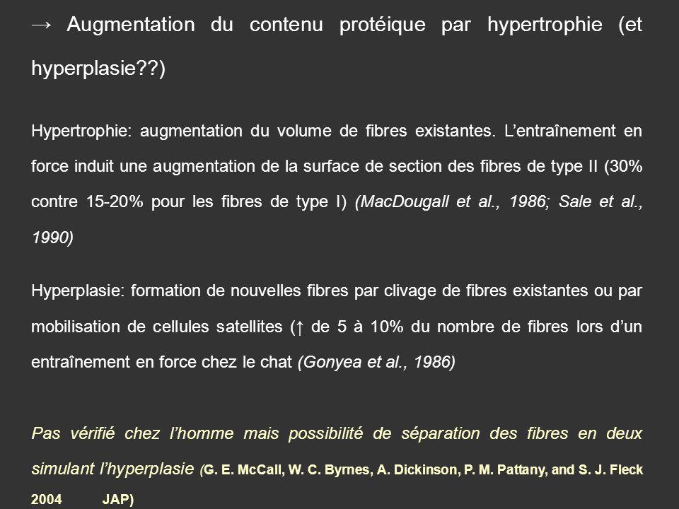 → Augmentation du contenu protéique par hypertrophie (et hyperplasie )