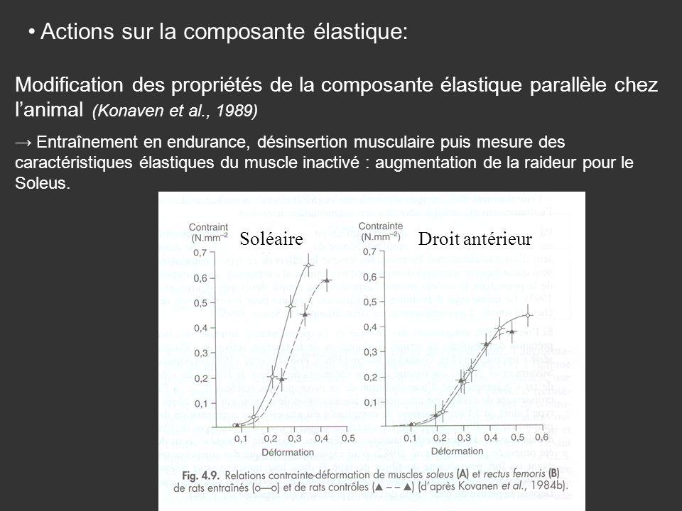 Actions sur la composante élastique:
