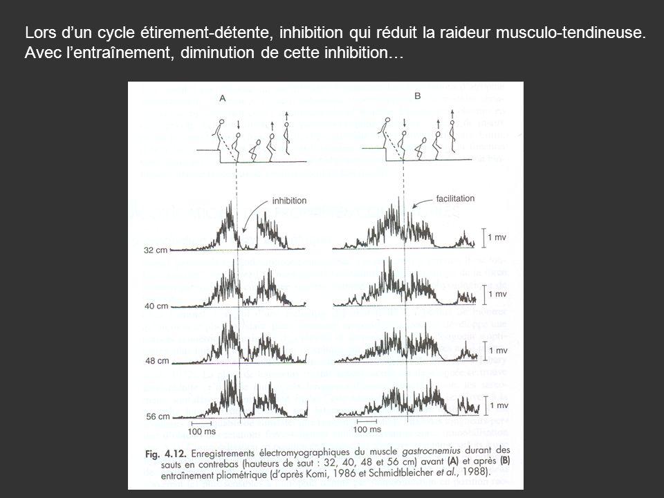 Lors d'un cycle étirement-détente, inhibition qui réduit la raideur musculo-tendineuse.
