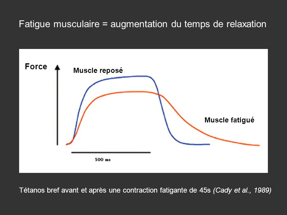 Fatigue musculaire = augmentation du temps de relaxation