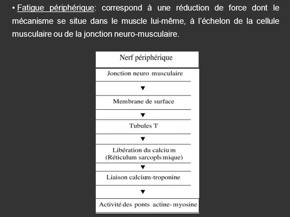 Fatigue périphérique: correspond à une réduction de force dont le mécanisme se situe dans le muscle lui-même, à l'échelon de la cellule musculaire ou de la jonction neuro-musculaire.