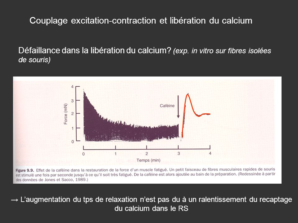 Couplage excitation-contraction et libération du calcium