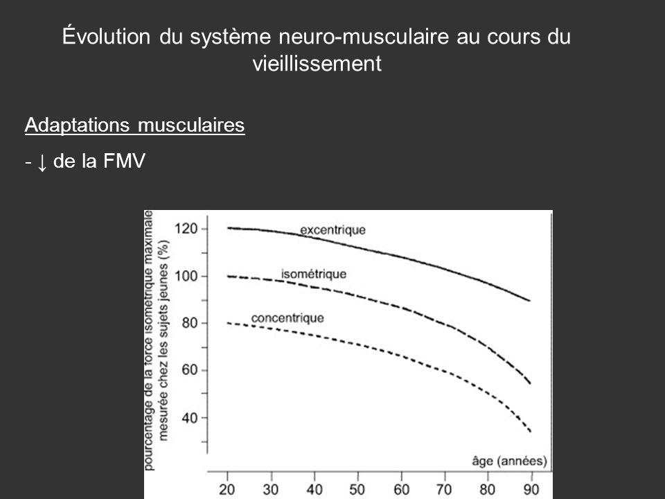 Évolution du système neuro-musculaire au cours du vieillissement