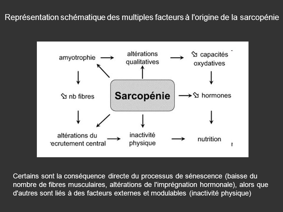 Représentation schématique des multiples facteurs à l origine de la sarcopénie